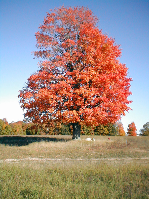 Autumn Hues - Tree in a Field