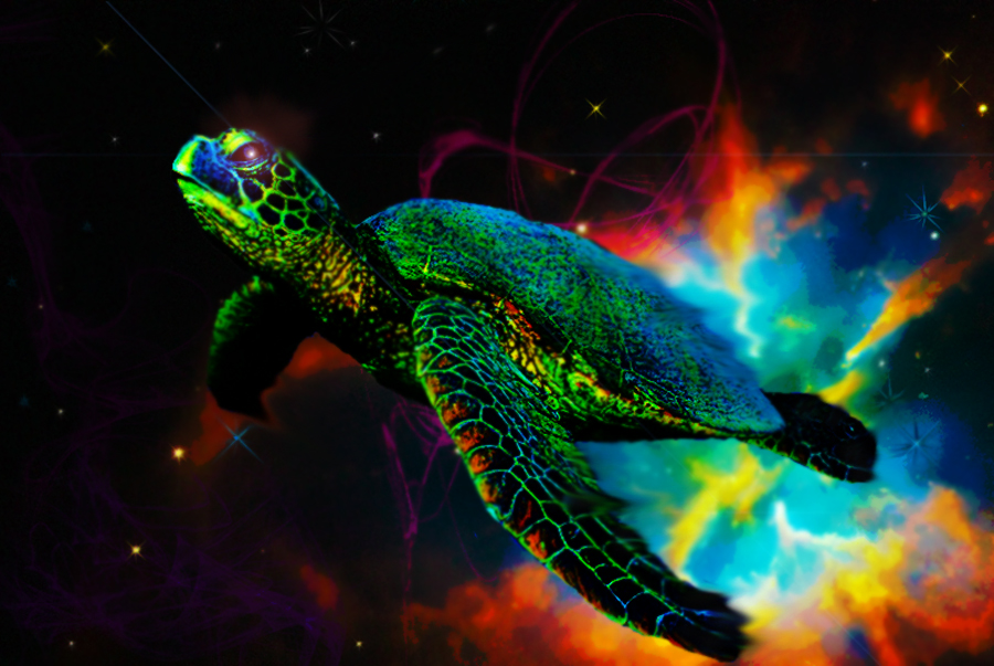 Dreams of A Cosmic Turtle